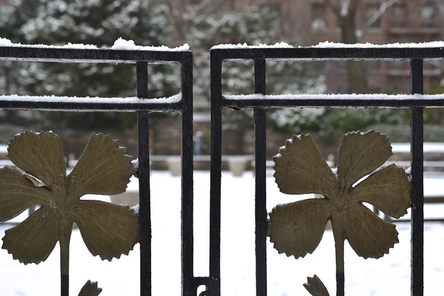 BBG's Fragrance Garden covered in snow. Photo by Blanca Begert.