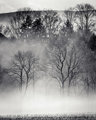 trees plants field fog unitedstates pennsylvania air hill agriculture summerhill tamronaf70300mmf456lddimacro