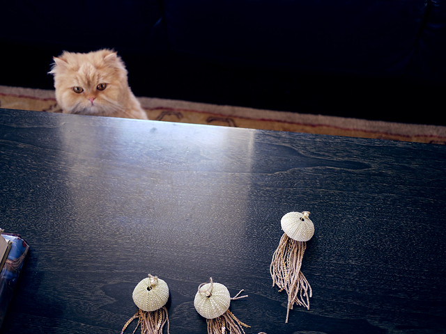 Nervous cat with Jellyfish ornaments