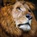 IMG_9930 by rinogautama
