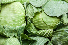 cabbage, vegetable, flower, leaf, leaf vegetable, green, produce, food, collard greens,
