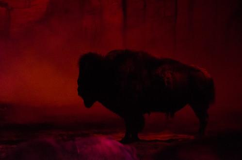 Buffalo Bill Show