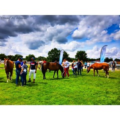 Before the race  #france #bourges #horse #endurance #race - Photo of Ids-Saint-Roch