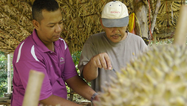 Preparing the durian