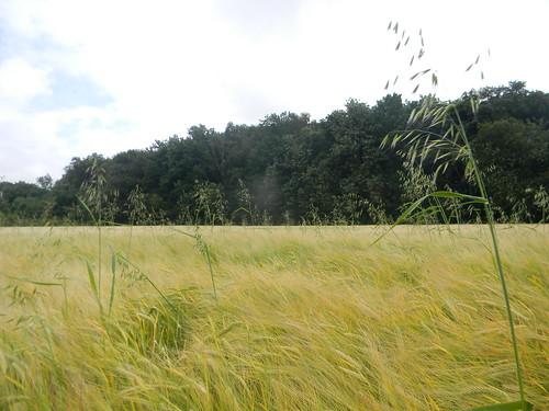 Oats'n'barley