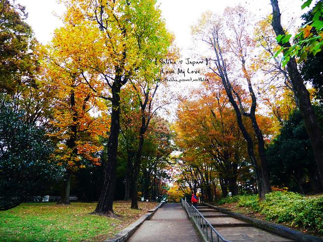 日本東京景點澀谷區代代木公園賞楓葉 (5)