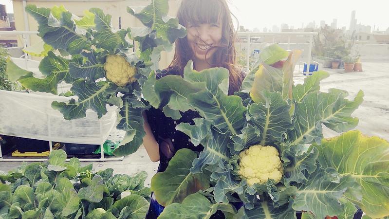 Cauliflower Harvest WP_20130611_02120130611193345