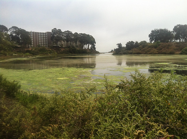 A view of the water from the college campus.