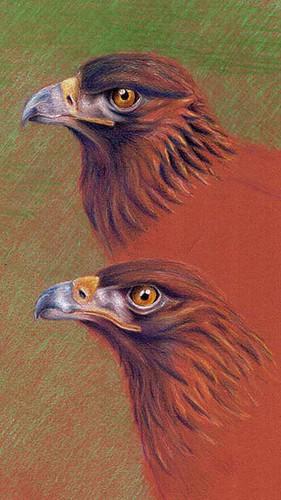 eagles10