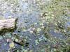 pelo dell'acqua tutto piante