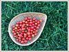 cherry tomato season is in full swing!