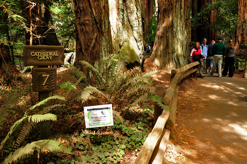 Cathedral Grove, Muir Woods National Monument