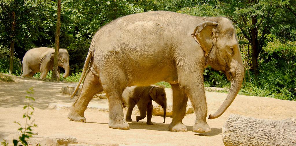 Elephant_128