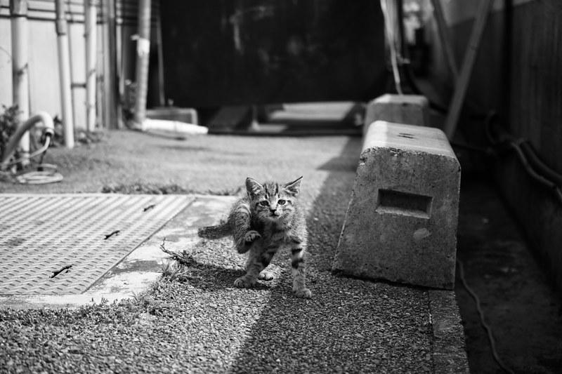 Cat Memories 2014/06/25