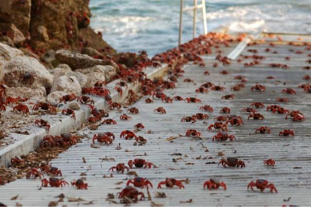 1_crab022.jpg