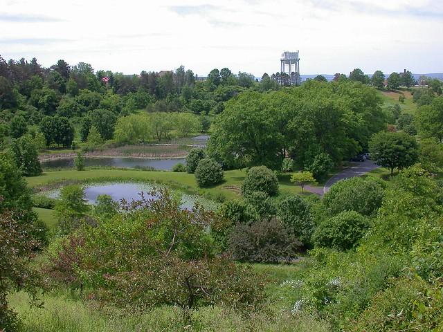 Arboretum view