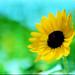 flower by David Adam Salinas