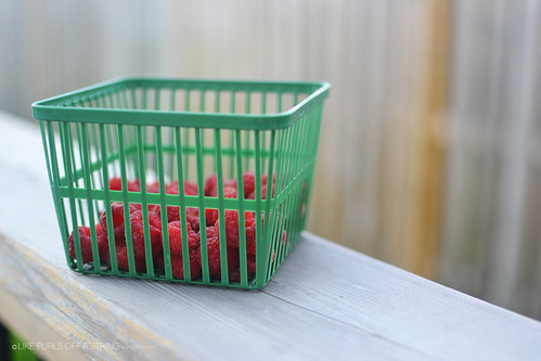 Fruition raspberries