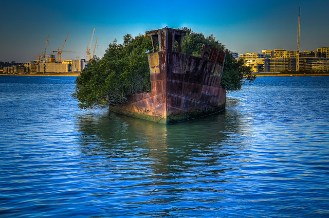 SS Ayrfield Wreck