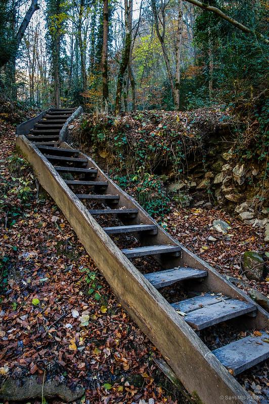 La escalera del bosque