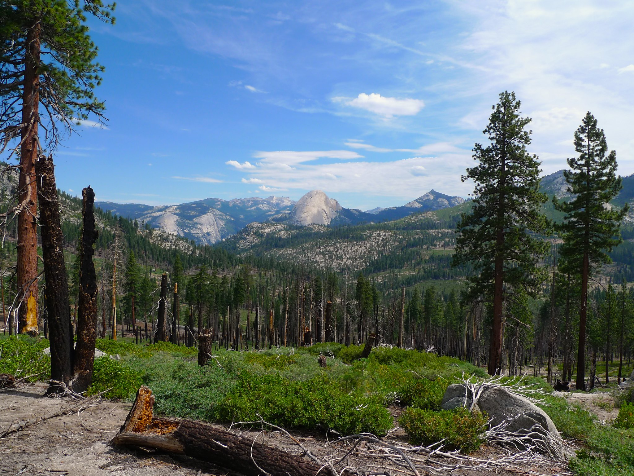 View of half dome through a burned area on the Mono Meadow Trail