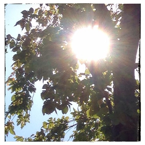 #fmsphotoaday July 17 - Sunshine