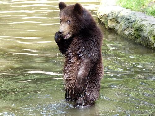 I'll be soon a very big Kamchatkan Bear, yeah:)) (explore 2014-08-11)