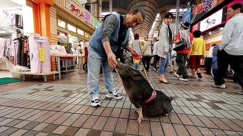 Mascotas en Tokyo