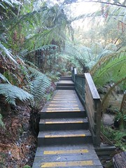 2014-08-10 Lilydale Falls 058 - Track board steps