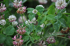 annual plant, flower, plant, subshrub, herb, wildflower, flora,
