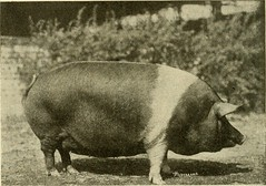 """Image from page 299 of """"Types and market classes of live stock"""" (1916)"""