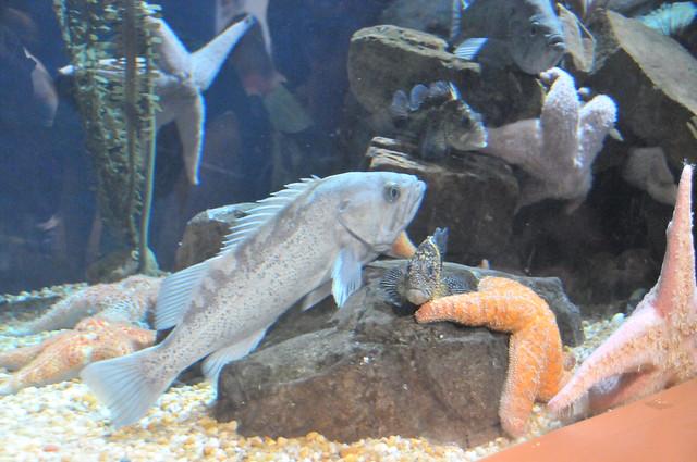 20_Georgia Aquarium