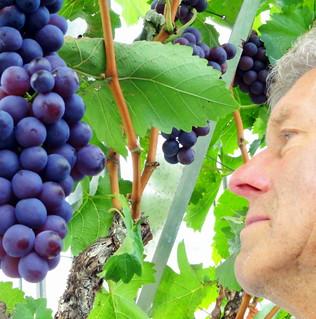 39# Druivenkweker
