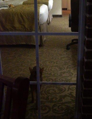 jakeNEMOhotelroomC08475
