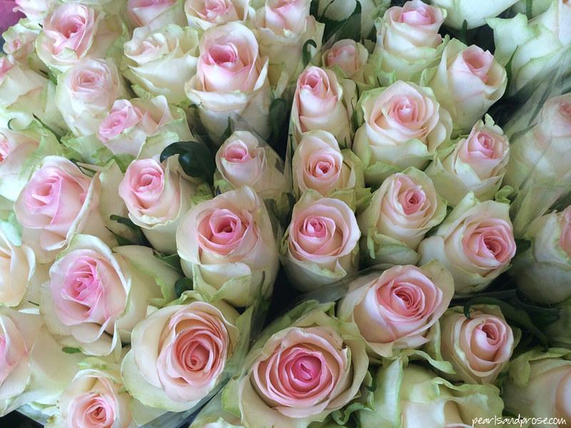 Tallinn_pink_roses2_web