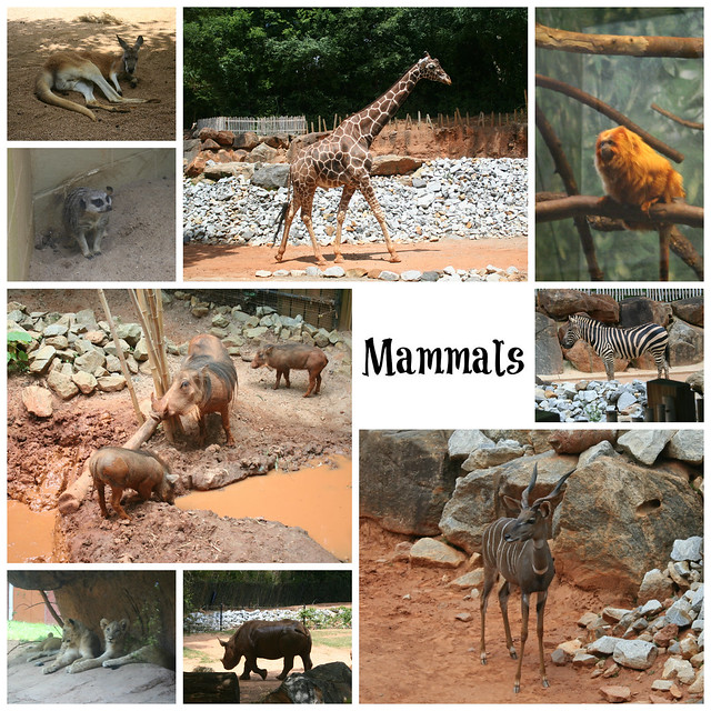 Mammals at Zoo Atlanta