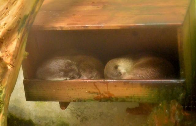 安佐動物公園 20131122