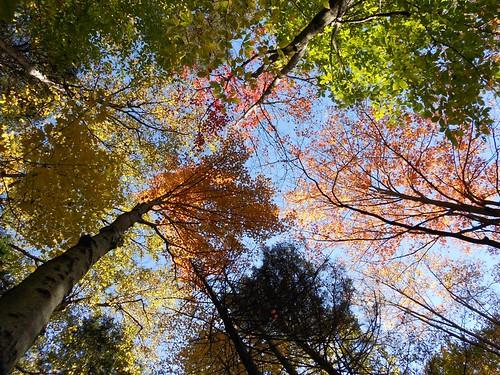 Autumn Color Spectrum