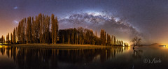 The Lake Wanaka Tree
