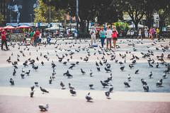 Pigeons | Barcelona #257/365