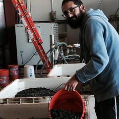 Rabbi Hillel of making #Kosher wine with @lafenetrewines #ShareSLO #ChabadSLO #Chabad