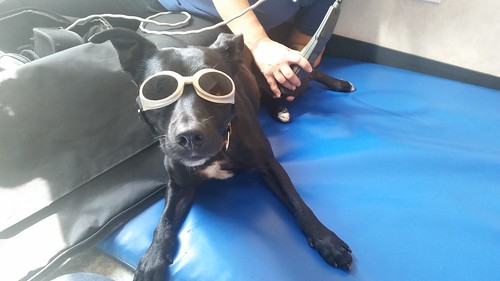 Doggles and lasers