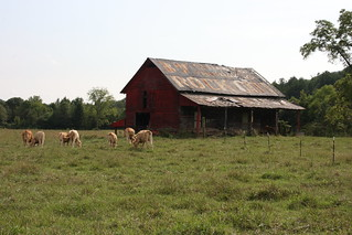 Old Barn With Rock City Advertisement / P2013-0902D155