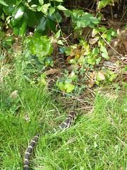 Snake as it left