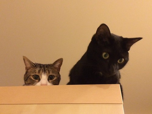 Amelia and Martha #cats atop shelf