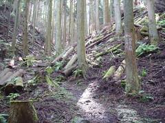 aoyamakogen_20131006133805
