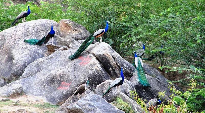 202 Alrededores de Pushkar (2)