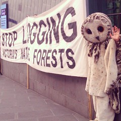 It's Friday and Melbourne is epic. So does the protesting owl at Fed square #melbourne #australia #epic #photo