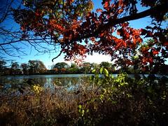 Mill Pond Park -- Autumn (52)