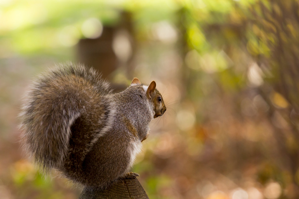 searching for nuts